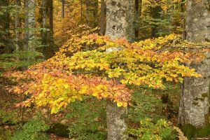 Feuillu avec ses couleurs d'automne