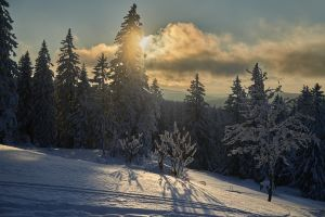 Foret-hiver