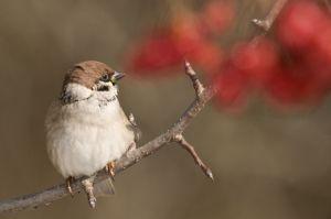 OISEAUX BIRDS